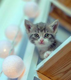 Kitten on a cat shelf