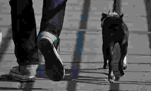 Taking dog on a walk may solve behavior problems