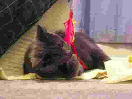Cat playing with a n interactive toy.
