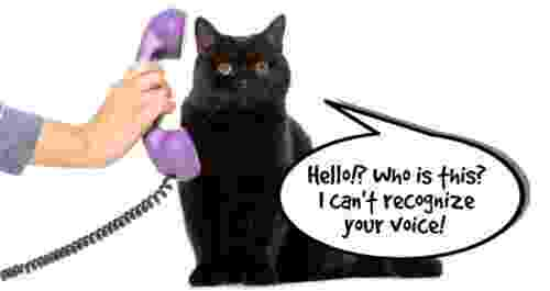 cat trying to recognize owners voice over the phone